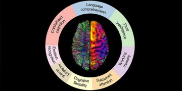 Dr. Sophia Frangou and Team Publish New Paper in Cerebral Cortex Uncovering Insights into Linkages Between Brain and Mind